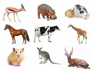Ponad 50 angielskich idiomów i przysłów z nazwami zwierząt