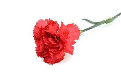 Kwiaty Po Angielsku Zdjecia Obrazki I Wymowa Szlifuj Swoj Angielski
