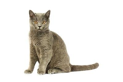 Kot w angielskich idiomach i słownictwie